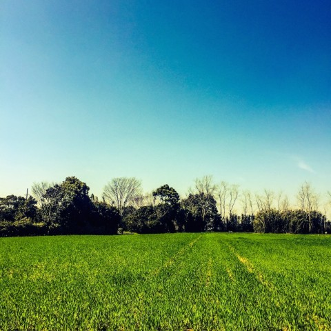 山武市にて、何の畑でしょうか?