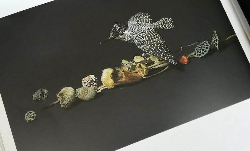 入荷情報:『画集 野田弘志 1971-1988』